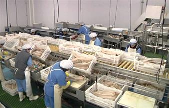 """""""النور"""" بكفر الشيخ يقترح إنشاء مصنع لتصنيع الأسماك بالمحافظة"""