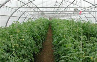 قانون الزراعة العضوية يرى النور.. وصلاحيات كاملة لـ«سلامة الغذاء» في الرقابة بعد صدور اللائحة التنفيذية