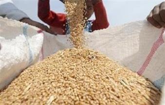 وزير زراعة تشاد: الاستثمار في الزراعة بأراضينا يحقق اكتفاءً ذاتيًا لمصر من القمح
