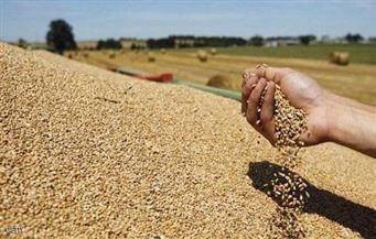 ارتفاع الكميات الموردة من القمح المحلي بمحافظة كفر الشيخ هذا العام لتصل إلي 180026 طنًا لأول مرة