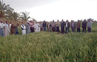"""""""زراعة الغربية"""": ارتفاع نسبة زراعة القمح للموسم الجديد إلى 130 ألف فدان"""