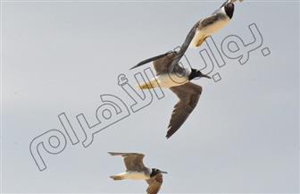 بالصور .. الاحتفال باليوم العالمى للطيور المهاجرة على سواحل البحر الأحمر