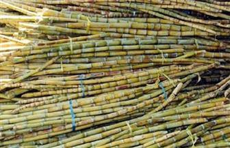 محافظ المنيا يتفقد زراعات قصب السكر بالصحراء الغربية ويوجه بسرعة التقنين للشباب تنفيذا لتعليمات الرئيس