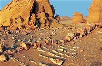 الاتحاد العربي للحياة البرية والبحرية يدرس مشروع العلاج بالدولفين في جمعيته العمومية