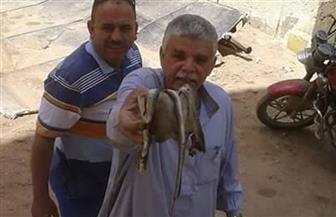 ثعبان يهاجم موظفى الوحدة المحلية لمدينة الفشن ويخرجهم من مكاتبهم
