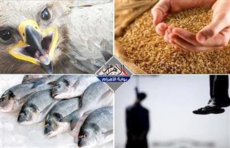 """حقيقة مافيا استيراد القمح.. تصنيف البحرية المصرية.. قائمة الإعدام في """"مذبحة كرداسة"""".. ونسر جريح  بنشرة الثالثة"""