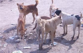 """حملة بيطرية للقضاء على""""الكلاب"""" الضالة فى حي الخليفة"""