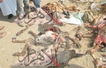 بالصور.. العثور على حمير مذبوحة بمدخل منطقة المطحن بكوم أمبو في أسوان
