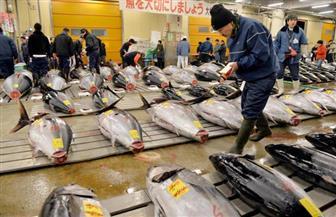 العالم يحيي غدًا اليوم العالمي لسمك التونة للمرة الأولى