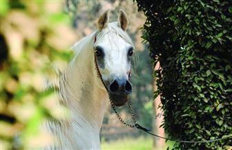 رجل أعمال وآخر يستوليان على ٢٢ مليون جنيه بحجة توظيفها فى تجارة الخيول