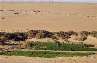 """""""الإسكان"""": بدء الاستفادة من مياه الآبار المالحة فى 15 تجمعًا تنمويًا بسيناء"""