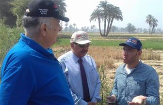 الشرقاوي: متوسط إنتاج فدان البطاطس هذا العام 16 ألف طن
