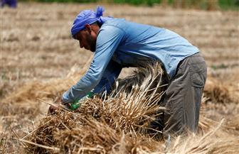 """رئيس قطاع الإنتاج بـ""""الزراعة"""" يتابع عمليات حصد القمح بمزارع القطاع في سدس- بني سويف"""