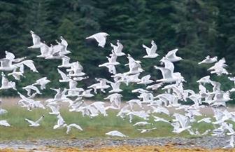 """غدًا.. إحياء اليوم العالمي للطيور المهاجرة تحت شعار """"مستقبلنا هو مستقبلهم"""""""