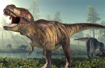الصين: اكتشاف آثار أقدام ديناصورات عمرها 80 مليون عام
