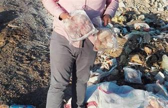 إعدام 450 كجم سمك ودجاج فاسد بمركز أخميم في سوهاج