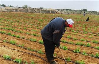 """لتنفيذ مشروع الزراعة العضوية بشمال سيناء.. """"زراعة النواب"""" توافق على منحة 100 ألف دينار كويتي"""