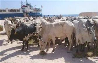 وصول 210 آلاف طن بضائع و4233 رأس ماشية إلى ميناء الإسكندرية