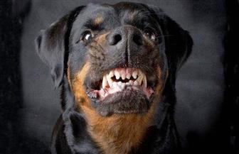 مصرع طفلة عقرها كلب في كفرالزيات بالغربية