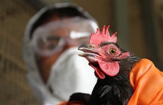 مستوى المخاطرة بإنفلونزا الطيور في فرنسا ينتقل من مرتفع إلى معتدل