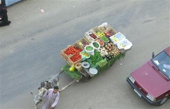 """مصادرة 10 عربات في حي المطرية ضمن مبادرة """"قاهرة بلا كارو"""""""