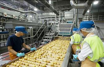 """""""الصناعات الغذائية"""": عدم تشكيل مجلس إدارة لهيئة سلامة الغذاء حتي الآن يضر بسمعة المنتجات المصرية"""