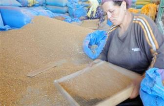 ارتفاع الكميات الموردة من القمح المحلي بمحافظة كفرالشيخ إلي 180 ألف طن