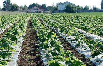 """الزراعة: حصاد 3.6 مليون فدان منزرعة بـ7 محاصيل شتوية.. و""""البنا"""": مستمرون في خطة النهوض بالمحاصيل"""