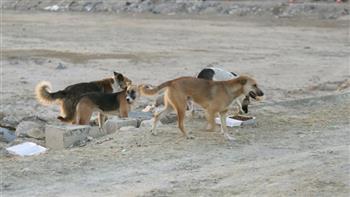 غلق مخزن مخالف في المرج وإبادة 17 كلب ضال في الزاوية الحمراء