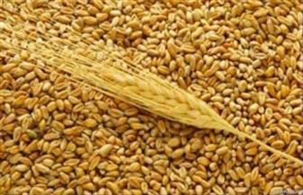 """""""الكسب غير المشروع"""" يتلقى 7 تقارير جديدة لخبراء العدل في """"فساد القمح"""""""