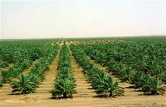 الزراعة: 4 ملايين فدان منزرعة بالمحاصيل الصيفية حتى الآن