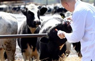 """استخدام الأجسام المضادة في""""الأبقار"""" كلقاح جديد ضد الإيدز"""