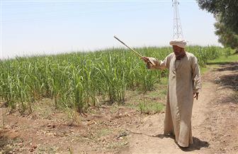 """معاناة الـ5 أشهر.. """"الهارونية"""" تستغيث من الجفاف.. ومزارعو القصب بقنا يستنجدون.. ومدير الري: الصرف المغطى السبب"""