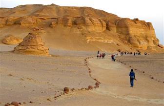 """مصر تعرض تجربتها بـ""""وادي الحيتان"""" خلال مؤتمر التنوع البيولوجي"""