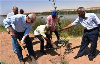 محافظ أسوان يزرع أول شجرة ضمن مبادرة زرع 530 شجرة بطريق الكورنيش | صور