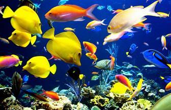 منى صالح: آمل في أن يتم تدريس علم جينات الأسماك في مصر