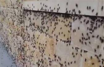 الحشرات الطائرة تغزو ملاعب بطولة ويمبلدون
