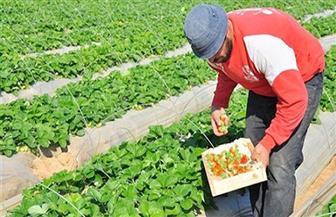 """وزير الزراعة يكلف """"عبدالعظيم"""" و""""عاصم"""" للعمل وكيلين لمركز البحوث الزراعية"""
