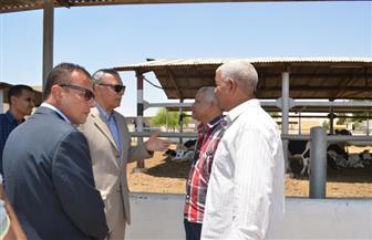 محافظ قنا يتفقد مشروعات الأمن الغذائي بمنطقة المعنا   صور
