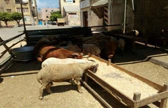 رفع شادر خراف وغلق كافية ومغسلة.. رئيس حي الدقي يقود حملة لرفع الإشغالات