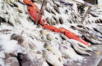 """عضو بـ""""الصناعات الغذائية"""": فرض رسم صادر علي الأسماك مجرد مسكنات"""