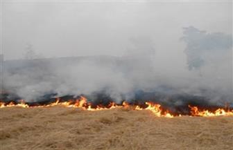 """""""البيئة"""" تحرر 1543 مخالفة سحابة سوداء لحرق قش الأرز بمحافظة الغربية"""