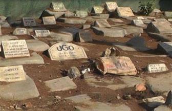 تعرف على مقابر الكلاب والقطط في مصر | صور