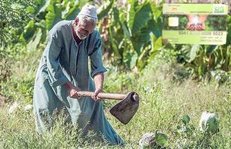 خبير زراعي: تفعيل الزراعة التعاقدية في المحاصيل الإستراتيجية تعمل على تشجيع الفلاح