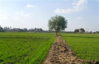 """رئيس """"الريف المصري"""": السيسي وجه ببناء تجمعات زراعية بمشروع 1.5 مليون فدان"""