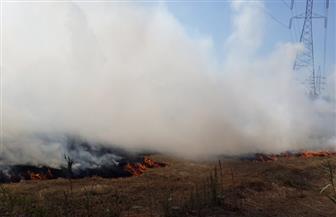 في خطتها لمواجهة تلوث الهواء.. البيئة تحرر ٩٢ محضرا لحرق المخلفات الزراعية