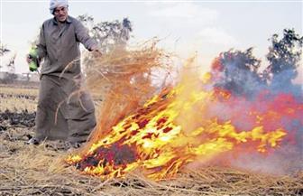 """""""البيئة"""": 2718 محضر حرق قش أرز وتجميع 40 ألف طن بالغربية وكفر الشيخ"""