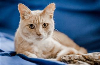 علماء: القطط أخطر مما نتصور..وهذه الأمراض التى تسببها