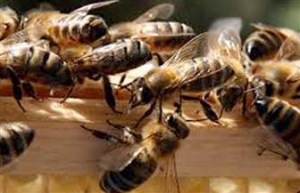 الزراعة تصدر 10 توصيات مهمة لمربي النحل لمجابهة الأجواء الباردة