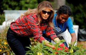 شاهد.. ميلانيا ترامب تحرث وتزرع حديقة الخضراوات بالبيت الأبيض